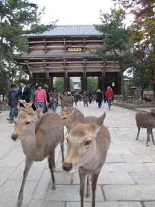 Japan_Nara (12)_Todai-ji